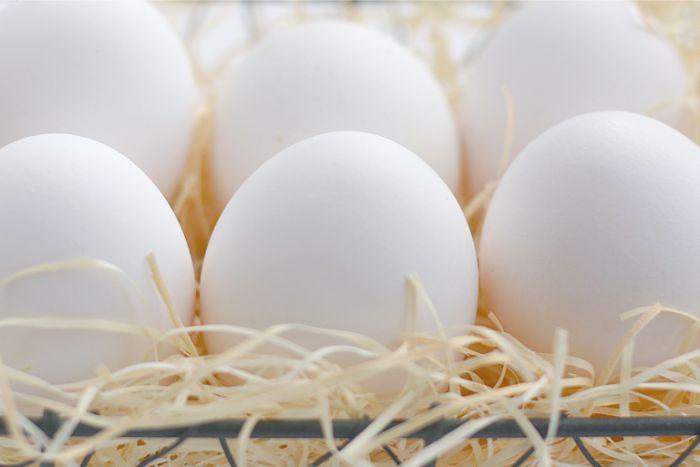 高時薪  雞蛋等蛋類加工品製造  個室宿舍