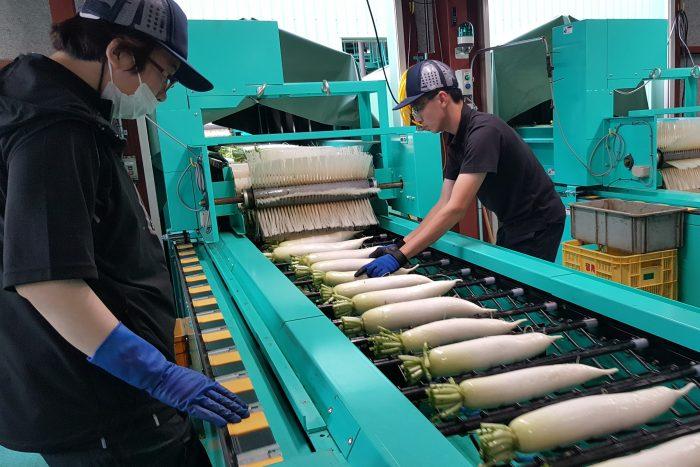 Y110.2 免日文能力!客室清掃及簡單農作業、選果作業(北海道)